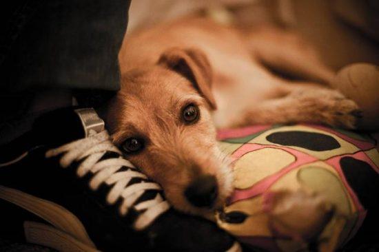 尋夢寵物|寵物相關討論網站